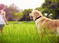 Partir en vacances avec ou sans son animal de compagnie ?