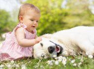 Comment préparer son chien à l'arrivée de bébé?