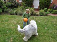 Apprendre à ses enfants à s'occuper d'un chien