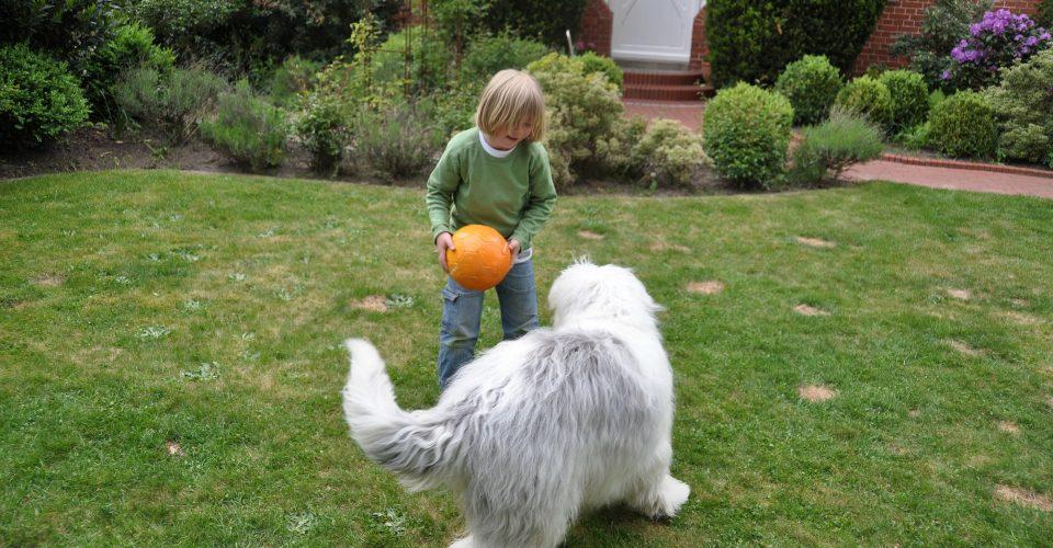 Apprendre ses enfants s 39 occuper d 39 un chien en tribu - Jeux de chiens a s occuper ...